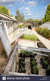 Victorian Kitchen Garden Old Green Houses Walled Victorian Kitchen Garden Stock Photo