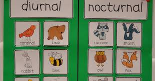 diurnal animals list for kids. Delighful List On Diurnal Animals List For Kids K