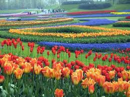 Small Picture 17 best ideas about flower garden design on pinterest growing