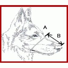 Husher Dog Muzzle Size 1