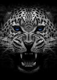 Angry jaguar face poster ' Poster by MK ...