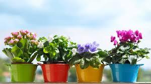 File: Pretty Flower Pot-High Quality.jpg | Barbara Benally