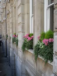 Build Window Box Boxwood Filled Window Boxes With Ivy Annuals Reminds Me Of
