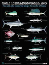 Samoan Fish Chart Spc Fame Digital Library