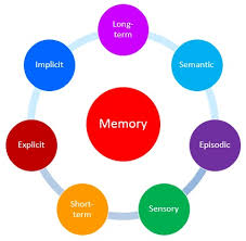 Long Term Memory Chart Classification Of Memory Types Of Memory