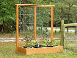 Small Picture Growing Plants on Trellises how tos DIY
