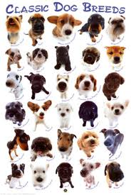 dog breeds alphabetical.  Breeds Dog Breeds With Alphabetical