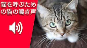 猫 の 鳴き声 音声