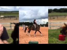 Dream Catchers Horse Ranch DreamCatcher Horse Ranch and Rescue Clermont FL YouTube 64