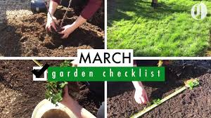 plant raspberries and strawberries prep lawn for spring march garden checklist