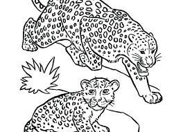 Leopard Coloring Pages At Getcoloringscom Free Printable