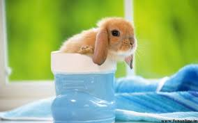 baby bunny wallpaper hd
