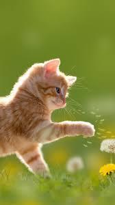 Animal / Cat Mobile Wallpaper - Cute ...