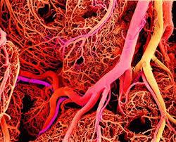 شبکه رگ های خونی چیست؟