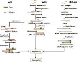 Illumina Sequencing Flow Chart Applications Of Next Generation Sequencing In Systemic