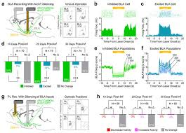 aneh co Snapper Ignition Switch Wiring Diagram nn 4553 sf9 amygdala inputs to prefrontal cortex guide behavior amid at aneh co