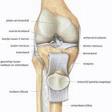 Beschadiging kraakbeen (artrose) - DE enkel