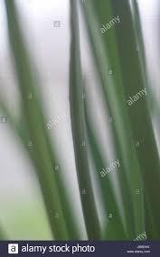 Closeup of grass blades Stock Photo Royalty Free Image 143049926
