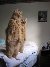 687 Best <b>Funny Animal</b> Pics images | <b>Funny Animals</b>, Cut <b>animals</b> ...