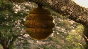 Resultado de imagen de fotos de panales de abejas