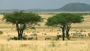 зоны Африки Природные зоны Африки