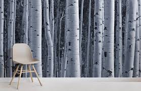 silver birch forest room wall murals