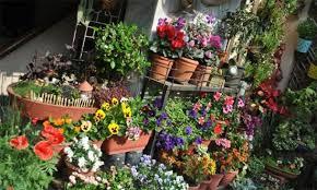 balcony gardens. Six Ways To Make Your Rooftops And Balcony Gardens Green Beautiful