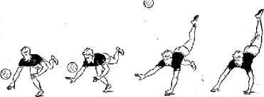Реферат Техника игры в защите в волейболе com Банк  Техника игры в защите в волейболе