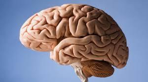 Image result for brain