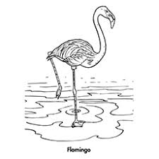 pictures of flamingos to color. Wonderful Color Flamingo Coloring Pages  Throughout Pictures Of Flamingos To Color Y