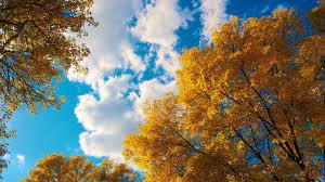3840x2160 trees 4k pc wallpaper free ...