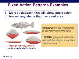 Fixed Action Pattern Example Delectable Animal Behavior Chapter Ppt Video Online Download