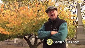 Alan Titchmarsh on growing witch hazels | Garden | Life \u0026 Style ...