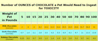 Activated Charcoal Activated Charcoal Dog Chocolate