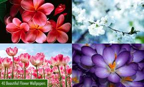 25 beautiful flower wallpapers for your