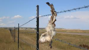 barbed wire fences. Modren Fences Last Updated By Michael Zimny On Jul 29 2016 At 1215 Pm For Barbed Wire Fences R