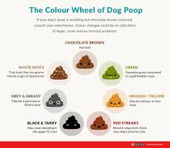 Fecal Scoring Chart Abnormal Faeces In Dogs And Cats