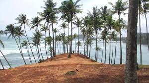 Coconut Tree Hill Mirissa Things To Do In Sri Lanka