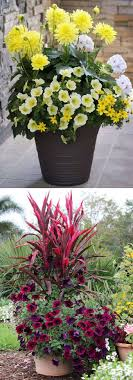 Small Picture 24 Stunning Container Garden Planting Designs A Piece Of Rainbow