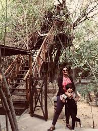 tree house jaipur. Tree House Tips Jaipur H
