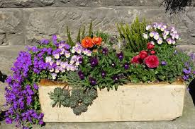 14 ideas for flowering container gardens