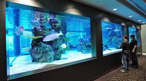 Office aquariums Small 30000 Gallon Office Aquarium New York Interior Design Commercial Aquariums Custom Aquarium Design Custom Aquarium Build