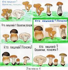 Урок биологии в м классе по теме Шляпочные грибы  Грибы сгруппированы по определенному признаку но один гриб в каждой карточке не имеет этого признака и поэтому является лишним