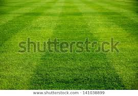 green grass soccer field. Beautiful Pattern Of Fresh Green Grass For Football Sport, Field, Soccer  Field S