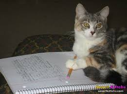 cat writing essay smart kittens cat writing essay