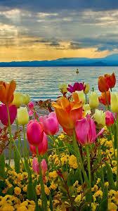 iPhone 7 Wallpaper Spring Flowers ...