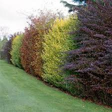 Why You Should Build A Living Fence By Planting Hedgerows. Privacy  PlantsPrivacy ...