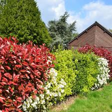 Sch Ne Fr H Und Sommerbl Hende Heckenpflanzen F R Ihren Garten Sichtschutz Und Sichtschutzhecken