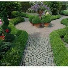 Small Picture Box hedging Buxus sempervirens Johnstown Garden Centre Ireland