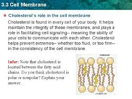 3 3 cell membrane key concept the cell
